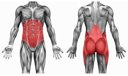 Músculos que conforman la zona media o core de nuestro cuerpo